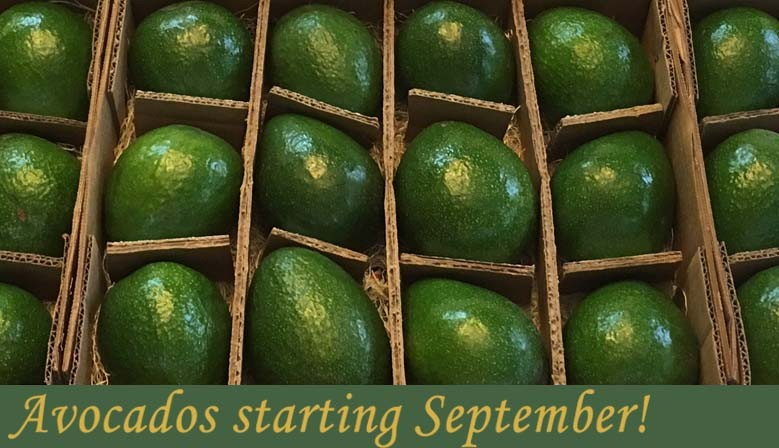Avocados coming September!