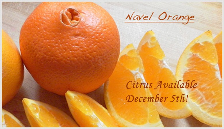 Citrus Available Dec. 5th-Navel Organges
