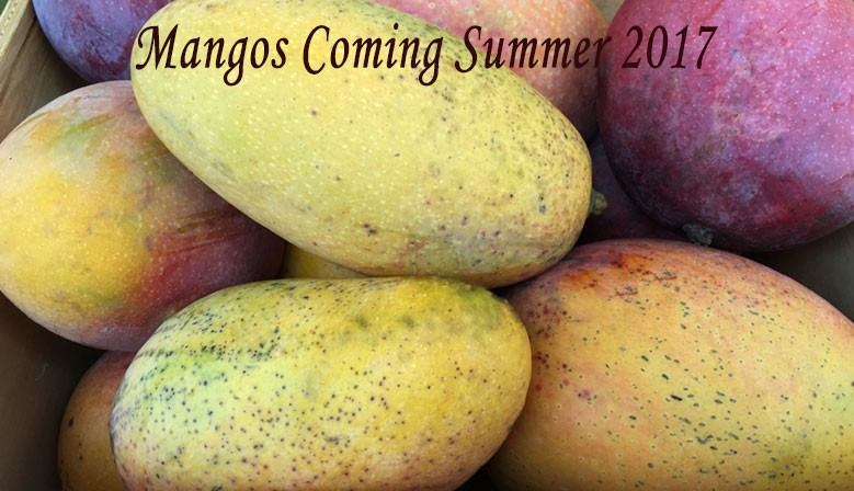Mangos coming Mid-June!